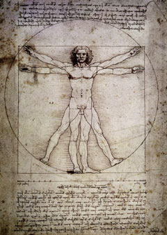 Vitruvian Man - The Proportions of the Human Figure